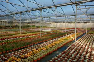covered greenhouses are dedicated to sowing, seedbeds, potted cactus and grafts