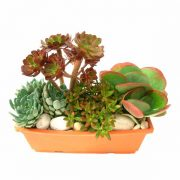 composition de plantes succulentas Jardí rectangular gran