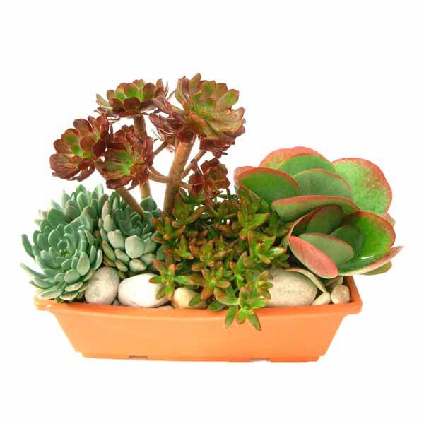 Jard n rectangular grande de plantas crasas clavisa - Composiciones de cactus ...