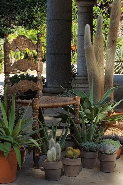 Contacta amb Clavisa el cultiu i el comerç de plantes suculentes