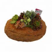 Piedra grande con plantas crasas de clavisa