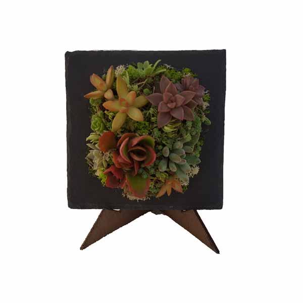 Pizarra cuadrada con plantas crasas de clavisa