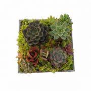 Cuadro madera con plantas crasas de clavisa