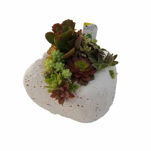 Pedra blanca con plantas crasas