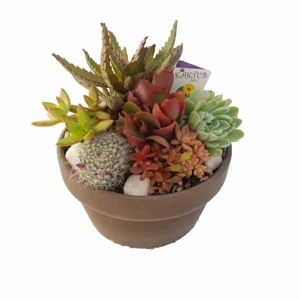 Rocalla grisil con plantas crasas de clavisa