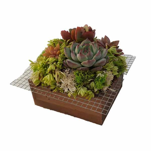 Tac pla con plantas crasas