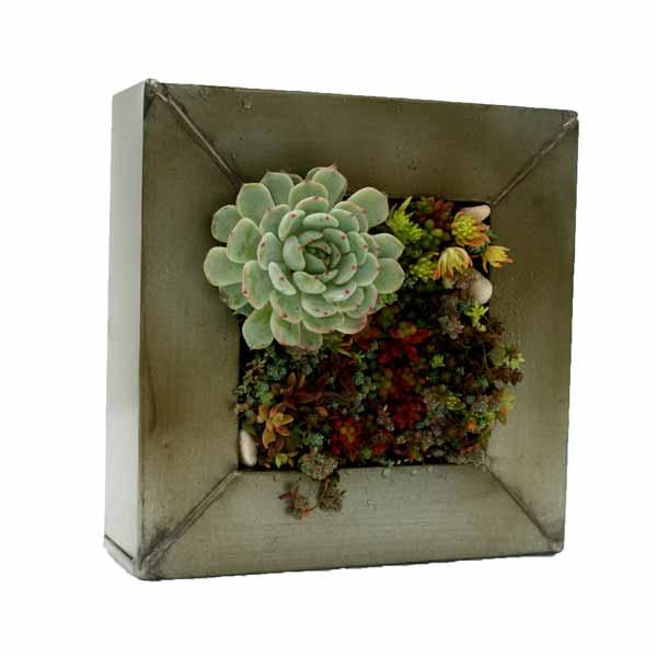 Masta con plantas suculentas de clavisa
