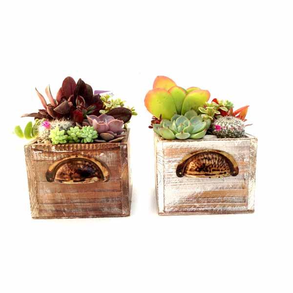 Fusta Pou decoracion con plantas crasas de Clavisa
