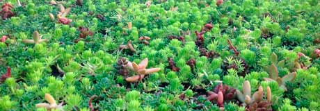 cultivation of ecological covers