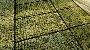 vivero de clavisa, cultivo de cactus