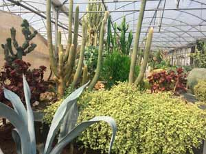Plantas madres de cactus y plantas crasas de Clavisa