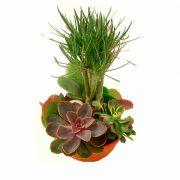 composition de plantes succulentas jardí rodó