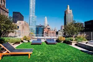 techo verde nueva york
