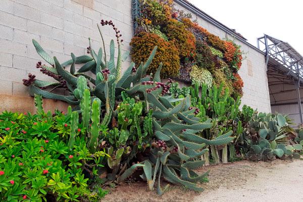 façade de clavisa avec grand cactus et jardin vertical