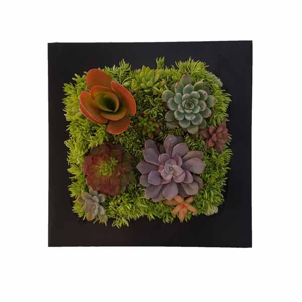 Cuadro metalico con plantas crasas de clavisa
