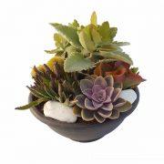 Jardin 25cm de diametro con plantas crasas de Clavisa