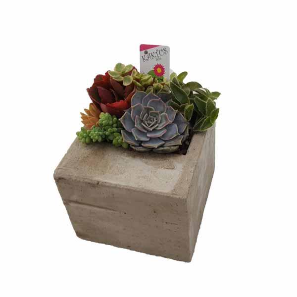 Stone square con plantas crasas